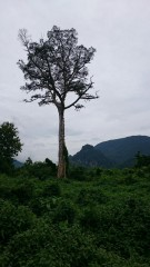 Dschungel1
