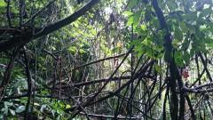 Dschungel6
