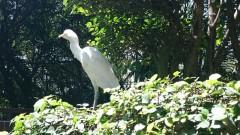 KLBirdpark4